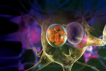 Rabies Immune Globulin: Ensuring Administration Safety - Pharmacy Practice  News